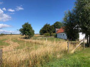 Lindgården